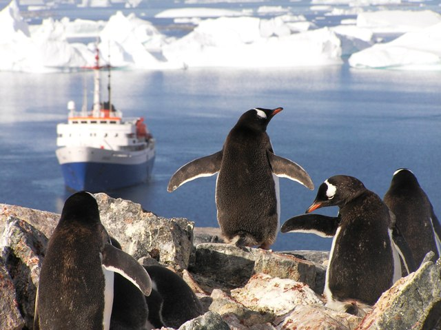 The Ushuaia and gentoo penguins.